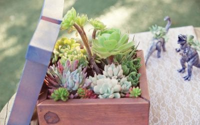 Carly and Travis  Succulent Themed Wedding